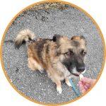 Bürohund Bella Dodos Denkwerkstatt