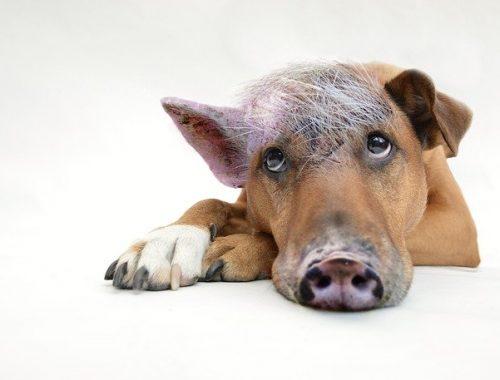 innerer Schweinehund Deutsch lernen Deutschkurs Deutschsprachkurs Sprachkurs Onlinesprachkurs